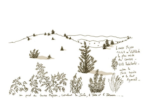 Végétation causse Méjean
